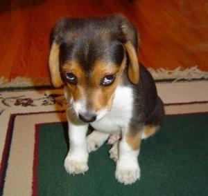 ashamed-dog